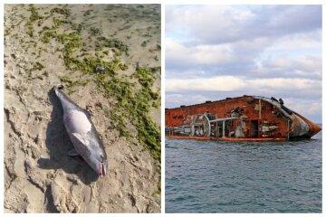"""Наслідки аварії танкера """"Делфі"""": на берег почали викидатися дельфіни, відео"""