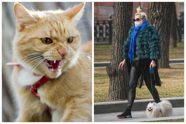 """Важное предупреждение: чем обернется прогулка с котом вместо собаки на карантине, """"никогда так не делайте"""""""