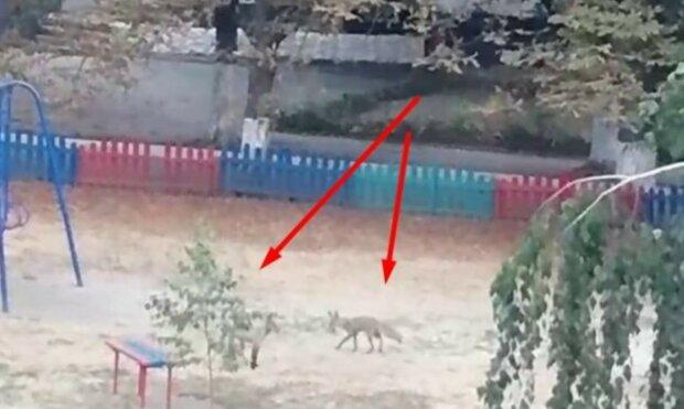 В Харькове промышляют хвостатые хищники, фото: