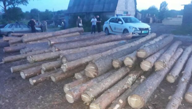 Массовую вырубку леса устроили на Харьковщине: остались одни пеньки, фото