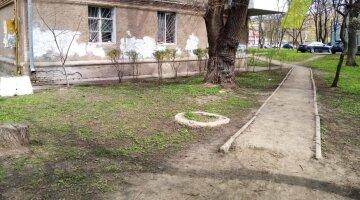 В Одесі масово потравили тварин: кричущі кадри НП
