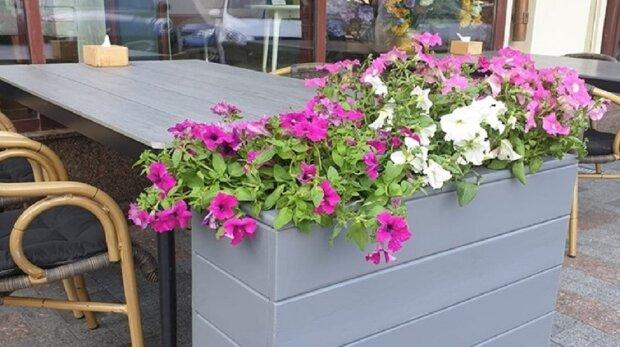 В Одесі влаштували боротьбу з квітковими клумбами: з'явилися фото
