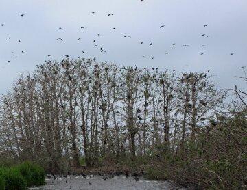 """""""Мертвый лес"""" появился в заповеднике на Одесчине: как он выглядит, фото"""