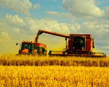 агробизнес, поле, урожай