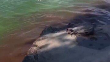 """Дніпряни зняли на відео злив відходів у річку: """"Коричнева пляма, а люди ще й купаються"""""""