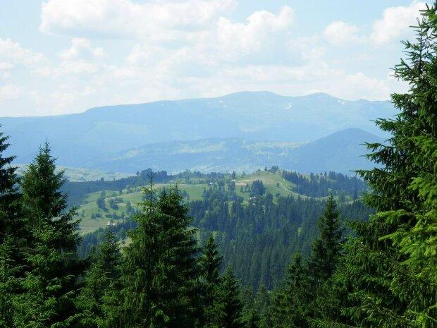 Карпаты лес