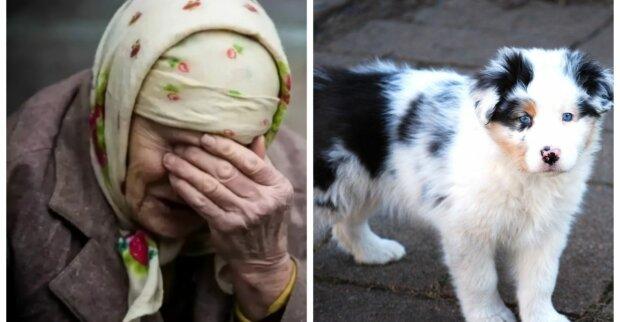 Мужчина купил у пенсионерки щенка за 500, но через неделю вернулся и доплатил еще 10000: что случилось