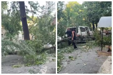 У центрі Одеси дерево не витримало і завалилося на мікроавтобус: відео НП