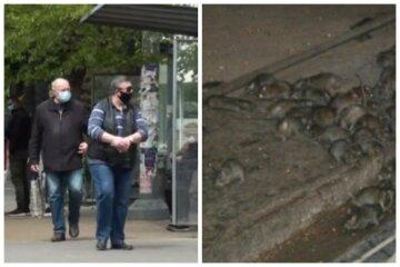 """Небезпечні гризуни заполонили українське місто, все ними кишить: """"Слід діяти негайно"""""""