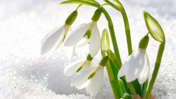 погода на 15 марта, весна, подснежник, погода в Украине