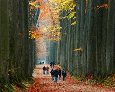 осень, люди