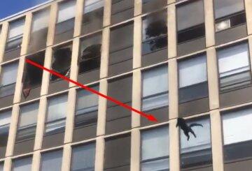 Люди закричали від переляку: кіт ефектно вистрибнув з палаючого п'ятого поверху, відео