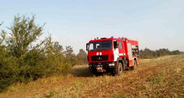 Житель Одещини безслідно зник у лісі: рятувальники прочісують кожен метр