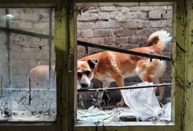 Беда случилась с четырьмя щенками в Днепре: спасатели бросились на помощь, видео