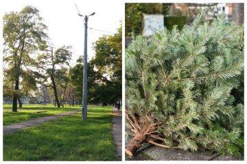 """""""Не прибрали з Нового року"""": одеський парк завалили ялинками, кадри дикості"""