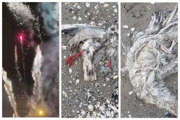 Птицы разбросаны по всему пляжу: в сети показали трагические последствия салюта в Одессе, кадры