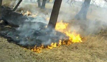 Огонь охватил Киевщину: спасатели делают все, что могут