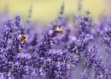 лето, цветы, пчелы, погода