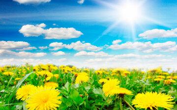 украина природа весна лето одуванчики солнечно погода солнце