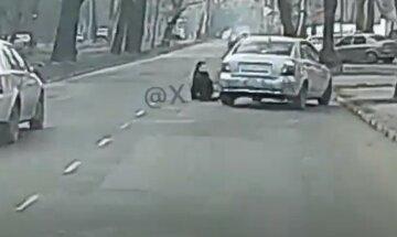 Прямо під колесами посковзнулася і впала: одеситка потрапила під машину, відео