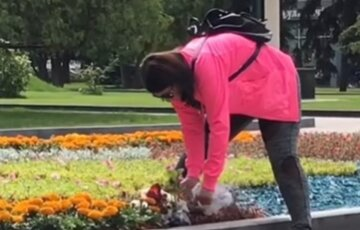 парк, цветы, Харьков