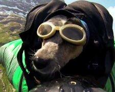 собака-парашютист
