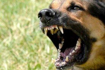 собака, агрессия