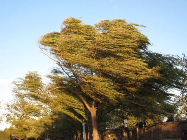 ветер-дерево