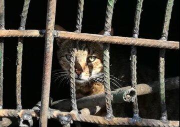 """У Києві кішку з кошенятами живцем заварили в підвалі: """"тому що антисанітарія і таргани"""""""