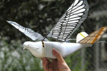 птицы дроны