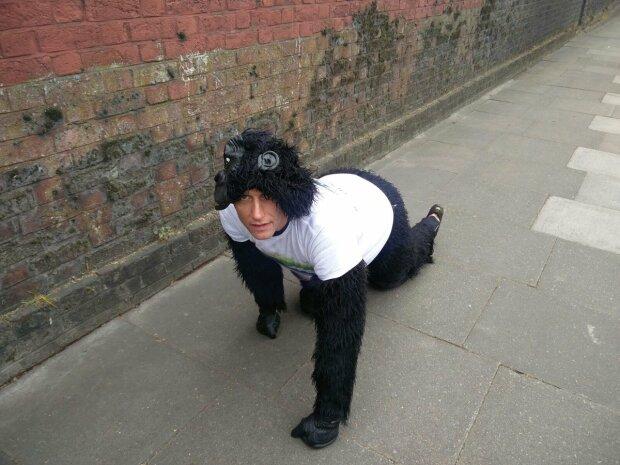 Марафонец в костюме гориллы поразил соцсети (фото)