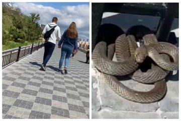 """На одесском пляже  встретили огромную змею, кадры: """"Они до таких размеров вырастают?"""""""