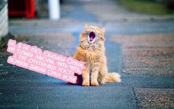 Cute-cat-yawns_1920x1200