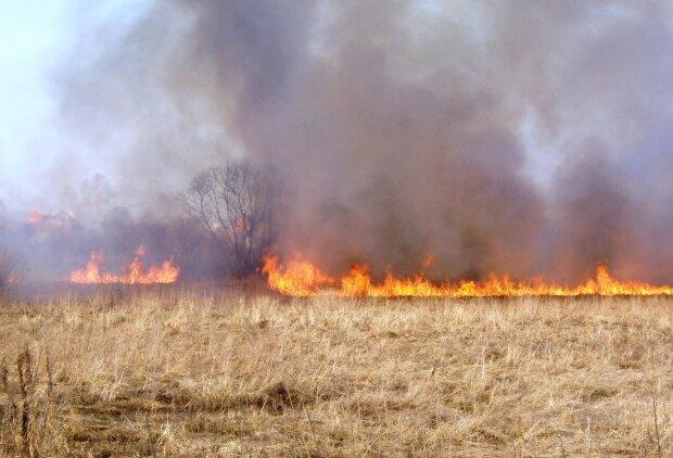 """Масштабна пожежа впритул підібралася до Харкова: """"видимість нульова"""", кадри"""