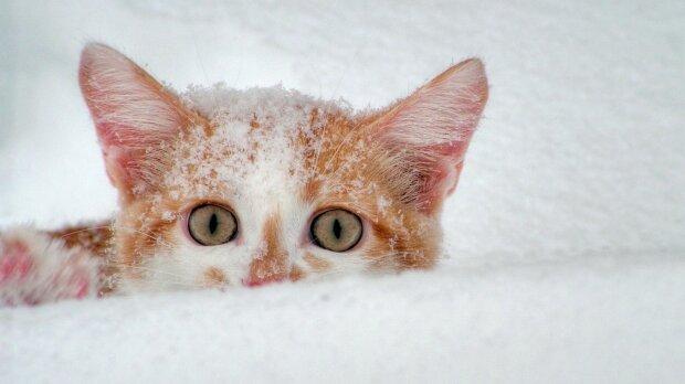 погода в декабре, снег, кот, мороз