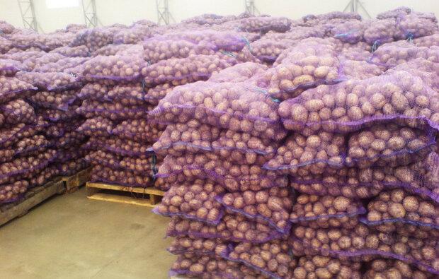 Обвалення картоплесховища забрало життя робітників у Росії