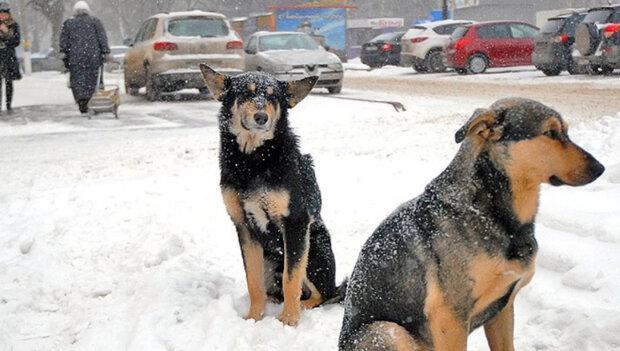 """Охотники за собаками активизировались в Днепре: """"отстреливают на глазах"""""""