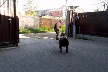 Собаки розтерзали перехожих, один не вижив: деталі трагедії в Донецькій області