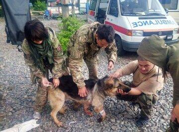 Собака героически спасла АТОшников от смерти (фото)