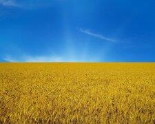 Поле желто-голубое Украина