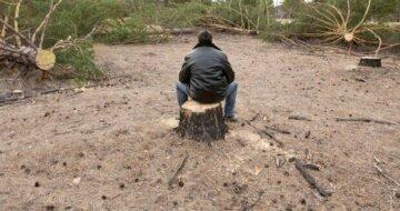 Ліс знищують на Одещині у розпал карантину: варварський вчинок потрапив на камеру
