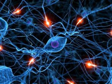 """Вчені """"воскресили"""" мозок після смерті: сенсація в світі науки"""