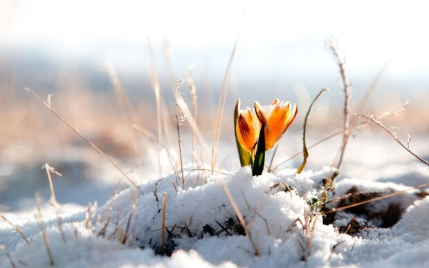 погода на март в украине, снег, весна