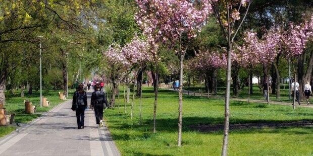 весна погода парк сакура