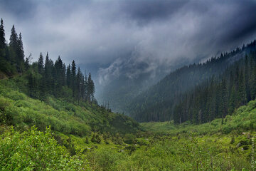 горы, карпаты, дождь