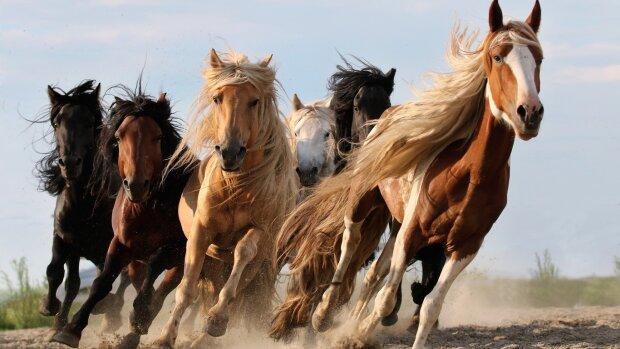 Одесские копы устроили погоню за табуном коней: кадры облетели  сеть