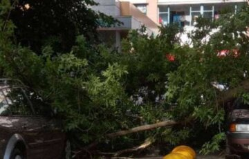 Стихія наробила біди в Харкові: з'явилося фото руйнувань