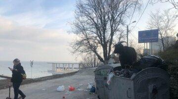 В разгар карантина популярный пляж в Одессе оккупировал рогатый скот: забавное фото
