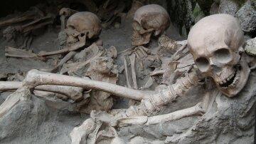 кости-скелеты