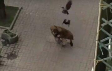 """На киевлянина средь бела дня напала стая оголтелых птиц, видео: """"пытался убежать, но..."""""""